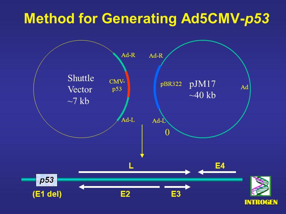 INTROGEN Method for Generating Ad5CMV-p53 Shuttle Vector ~7 kb pJM17 ~40 kb 0 pBR322 Ad-L Ad-R Ad-L Ad-R CMV- p53 Ad p53 E4 E2 E3 (E1 del) L