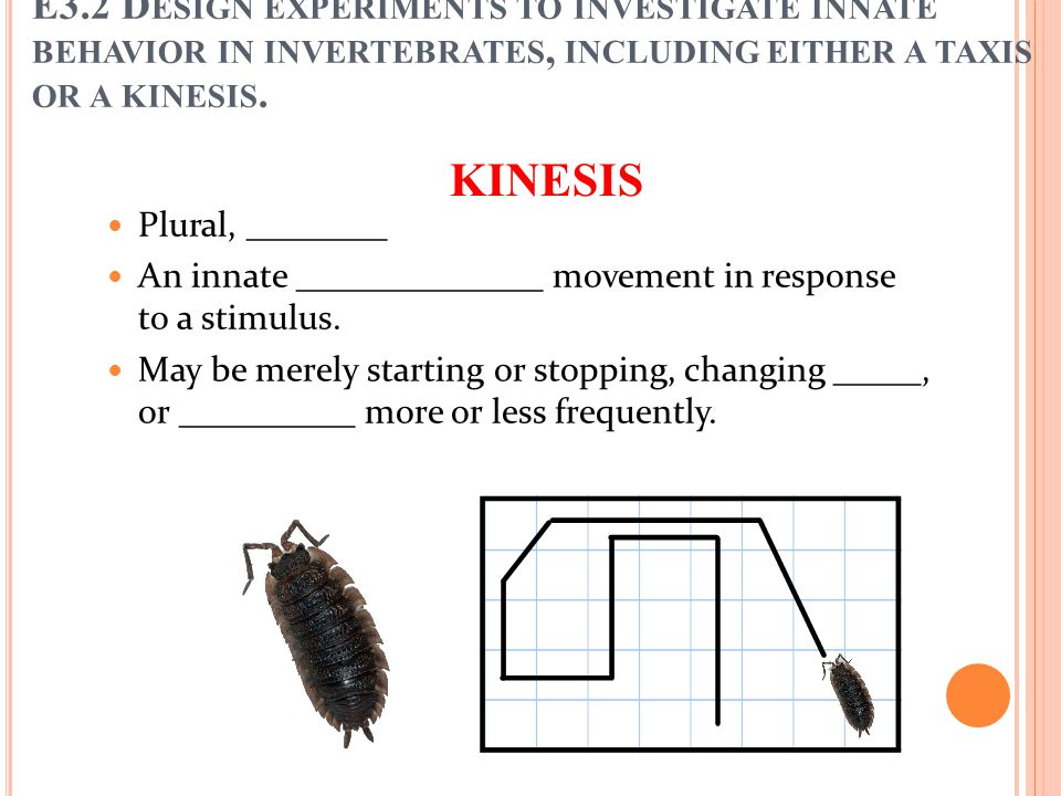 KINESIS Plural, ________ An innate ______________ movement in response to a stimulus. May be merely starting or stopping, changing _____, or _________
