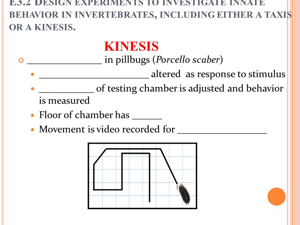 KINESIS Orthokinesis in pillbugs (Porcello scaber) Video played back, with ______________________ counted as movement in the time period ______________________ calculated as number of squares crossed per second (mean of six runs) E3.2 D ESIGN EXPERIMENTS TO INVESTIGATE INNATE BEHAVIOR IN INVERTEBRATES, INCLUDING EITHER A TAXIS OR A KINESIS.