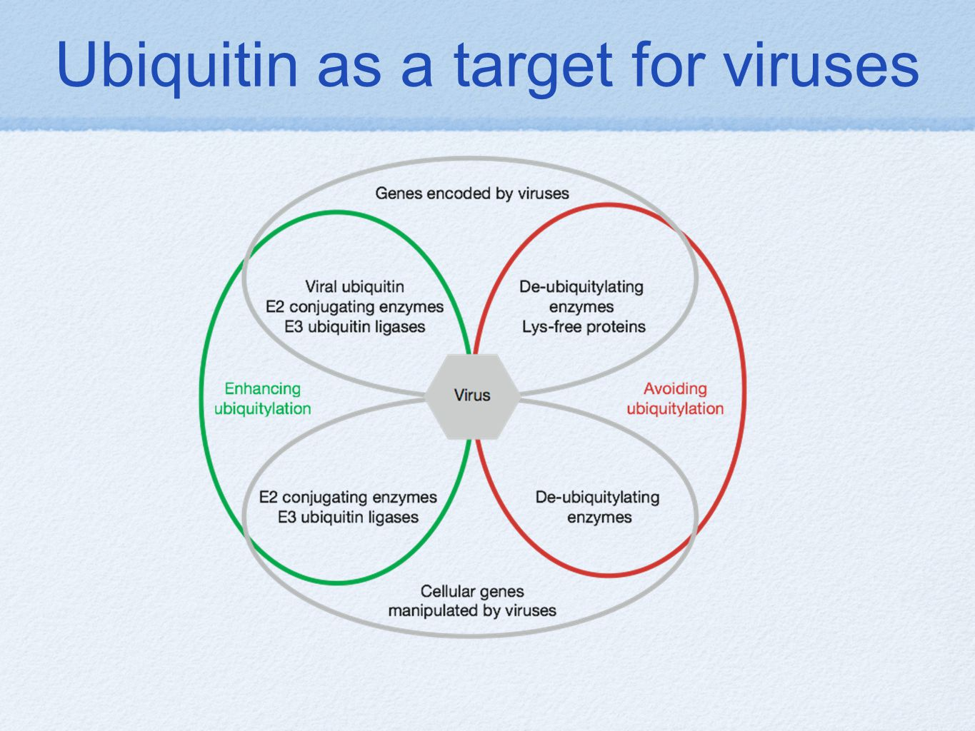 Ubiquitin as a target for viruses