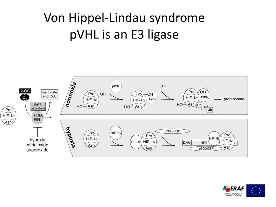 Von Hippel-Lindau syndrome pVHL is an E3 ligase