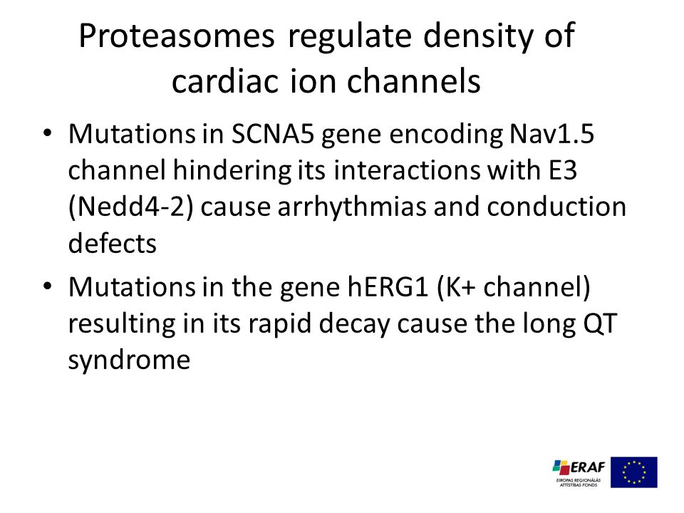 Proteasomes regulate density of cardiac ion channels Mutations in SCNA5 gene encoding Nav1.5 channel hindering its interactions with E3 (Nedd4-2) cause arrhythmias and conduction defects Mutations in the gene hERG1 (K+ channel) resulting in its rapid decay cause the long QT syndrome