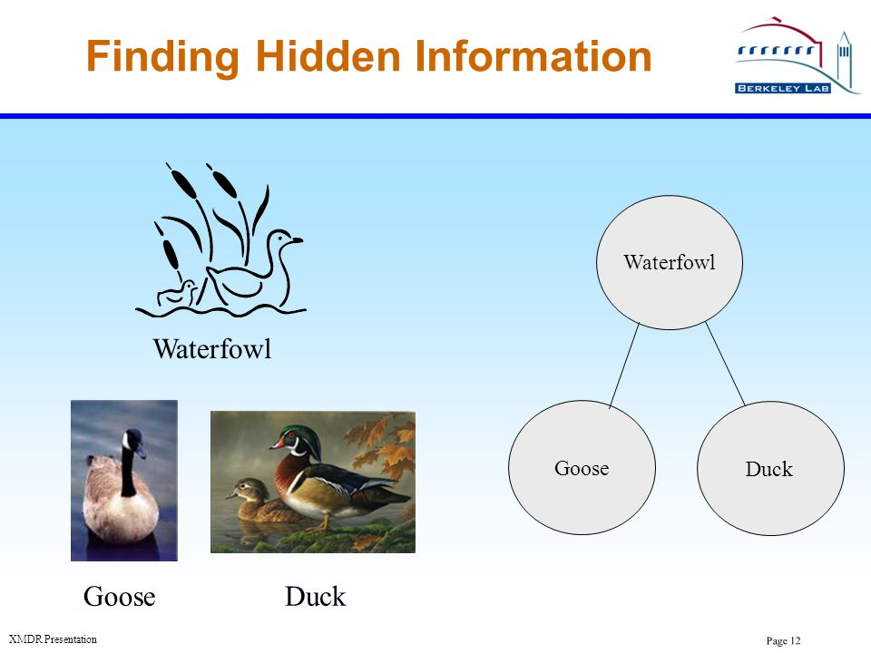 Page 12 XMDR Presentation Finding Hidden Information GooseDuck Waterfowl Duck Goose Waterfowl