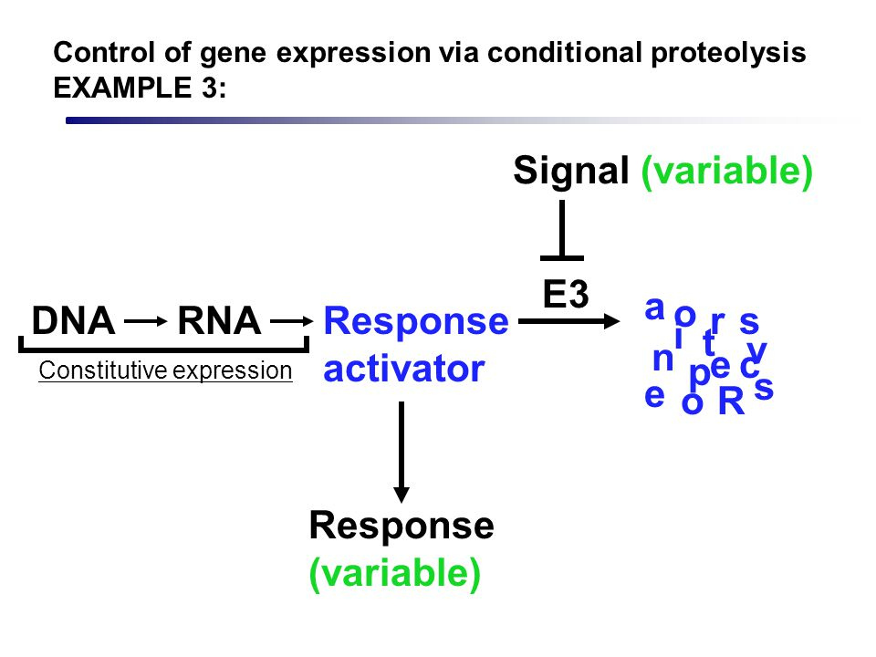 Response activator Signal (variable) Response (variable) DNARNA R e s p n s e a c t i v r o o Constitutive expression E3 Control of gene expression vi