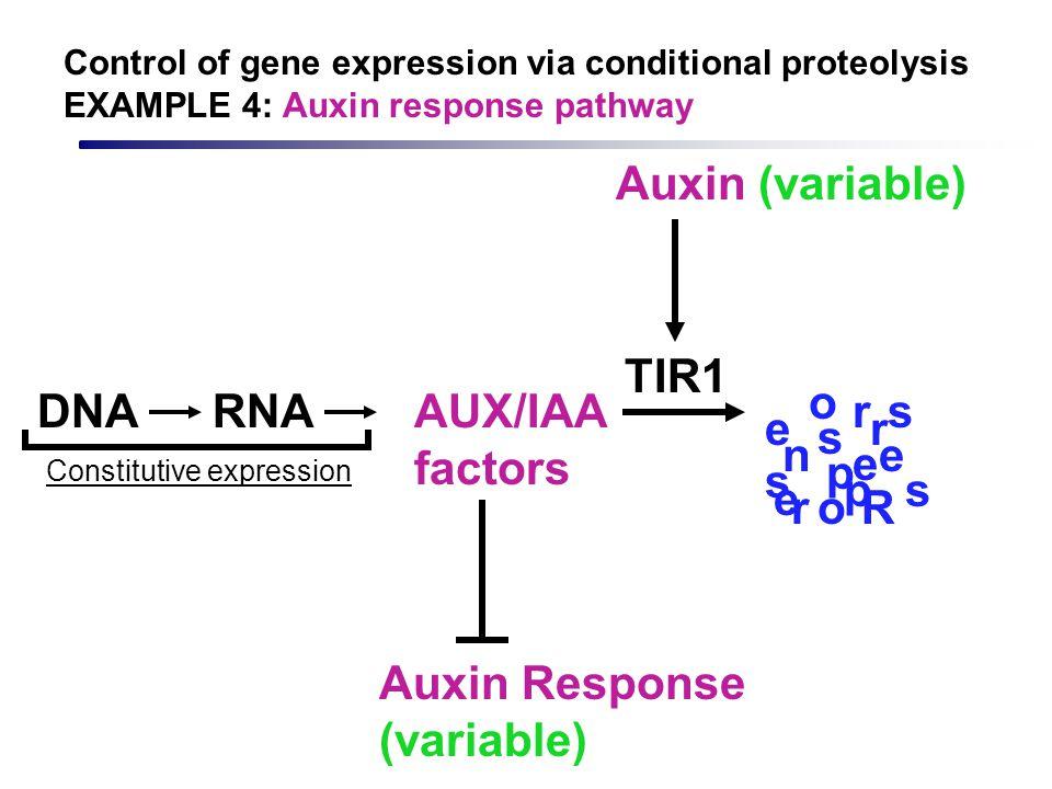 AUX/IAA factors Auxin Response (variable) DNARNA Constitutive expression Auxin (variable) TIR1 R e s p n s e r o o s s e e r r p Control of gene expre
