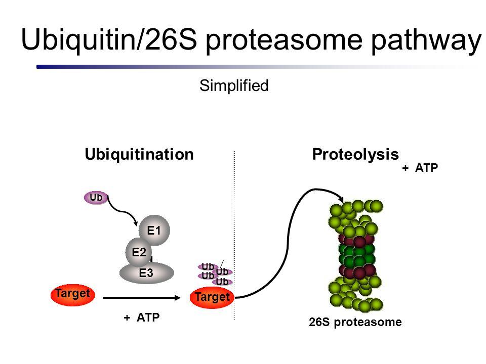 Response repressor * Signal (variable) Response (variable) DNARNAResponse repressor Constitutive expression R e s p n s e r o o s s e e r r p E3 Control of gene expression via conditional proteolysis EXAMPLE 1: