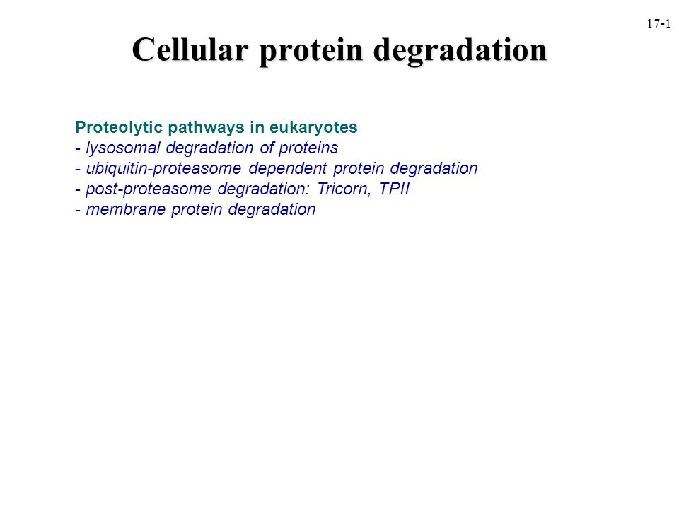 Cellular protein degradation Proteolytic pathways in eukaryotes - lysosomal degradation of proteins - ubiquitin-proteasome dependent protein degradation - post-proteasome degradation: Tricorn, TPII - membrane protein degradation 17-1