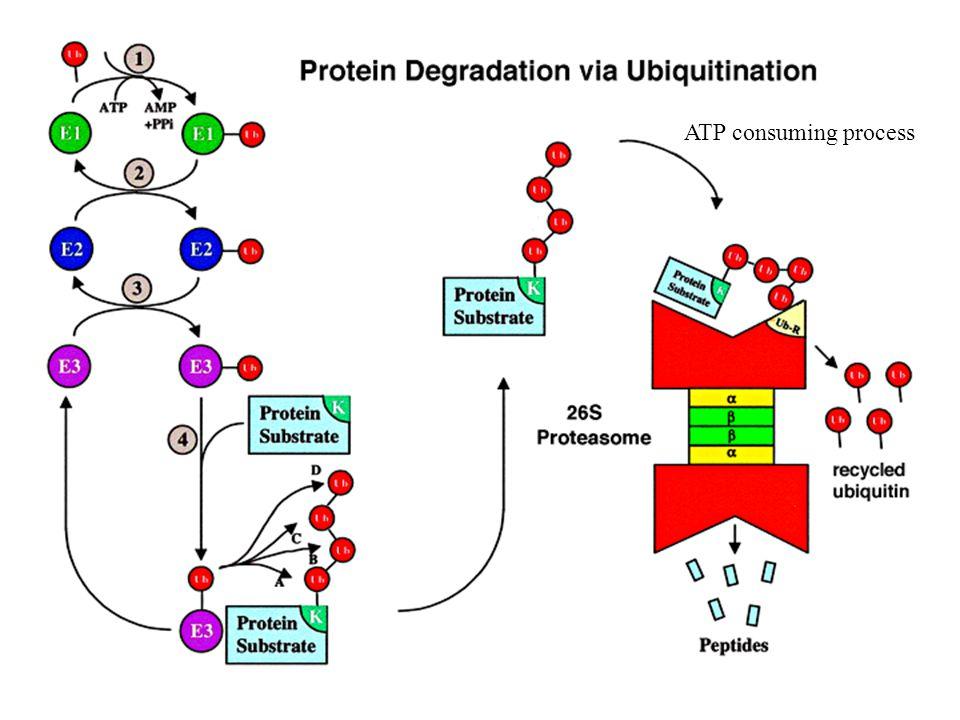 ATP consuming process