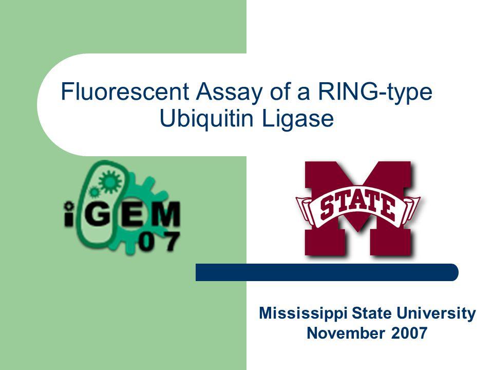 Fluorescent Assay of a RING-type Ubiquitin Ligase Mississippi State University November 2007