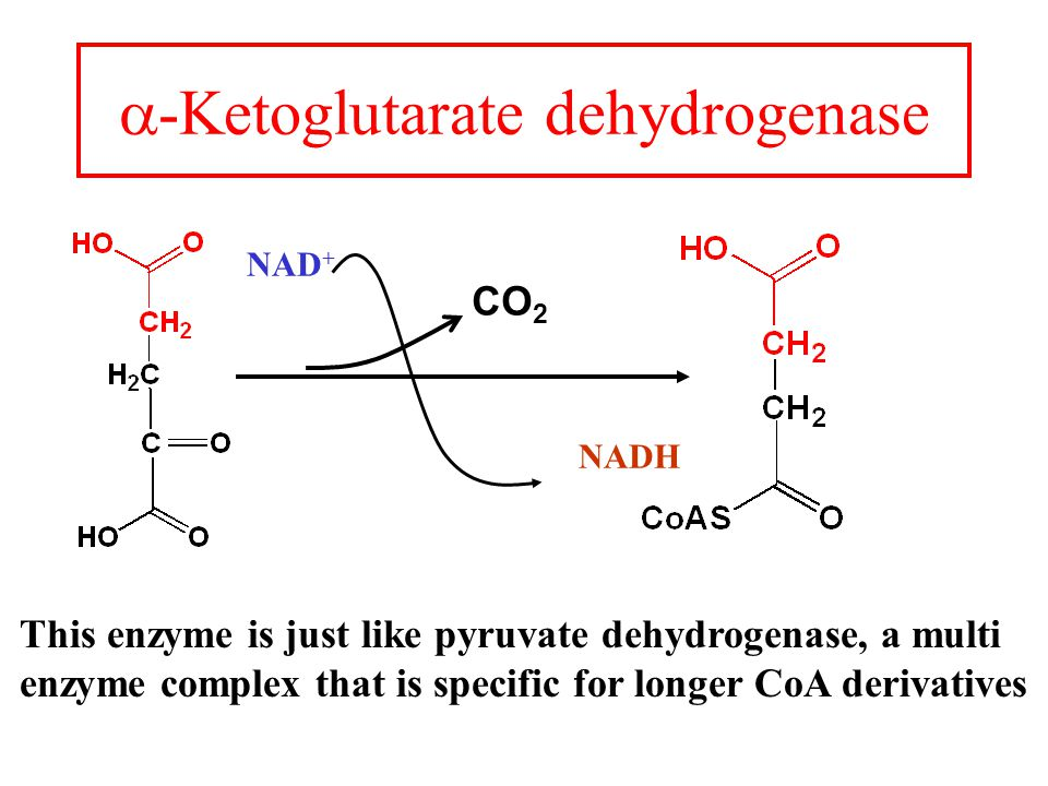  -Ketoglutarate dehydrogenase CO 2 This enzyme is just like pyruvate dehydrogenase, a multi enzyme complex that is specific for longer CoA derivatives NAD + NADH