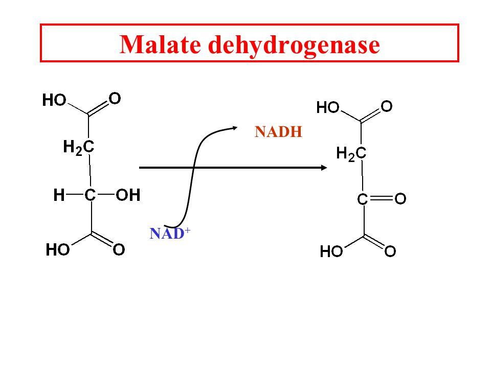 Malate dehydrogenase NAD + NADH