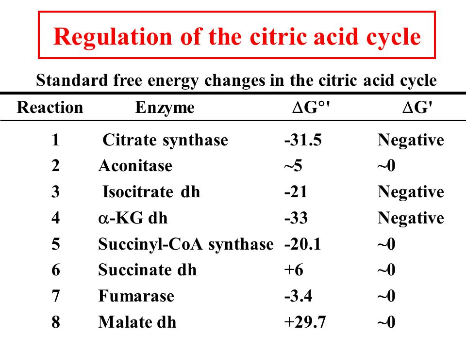 Regulation of the citric acid cycle Standard free energy changes in the citric acid cycle Reaction Enzyme  G   G 1 Citrate synthase-31.5Negative 2Aconitase~5~0 3 Isocitrate dh-21Negative 4  -KG dh-33Negative 5Succinyl-CoA synthase-20.1~0 6 Succinate dh+6~0 7Fumarase-3.4~0 8Malate dh+29.7~0