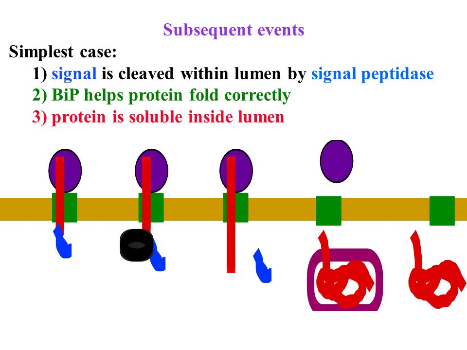 Subsequent events Complications: proteins embedded in membranes