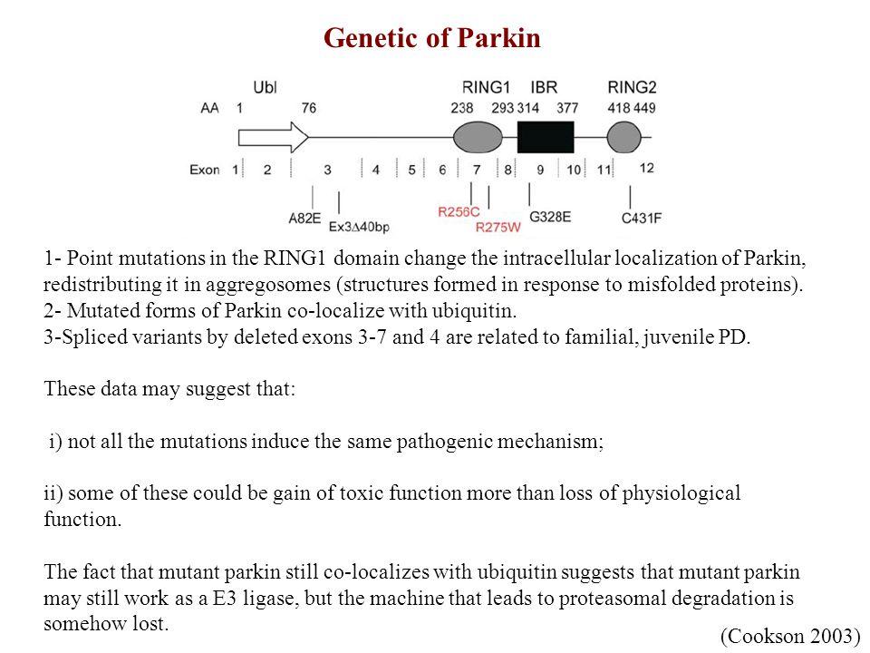 MPTP Treatment6-OHDA Treatment Models for PD