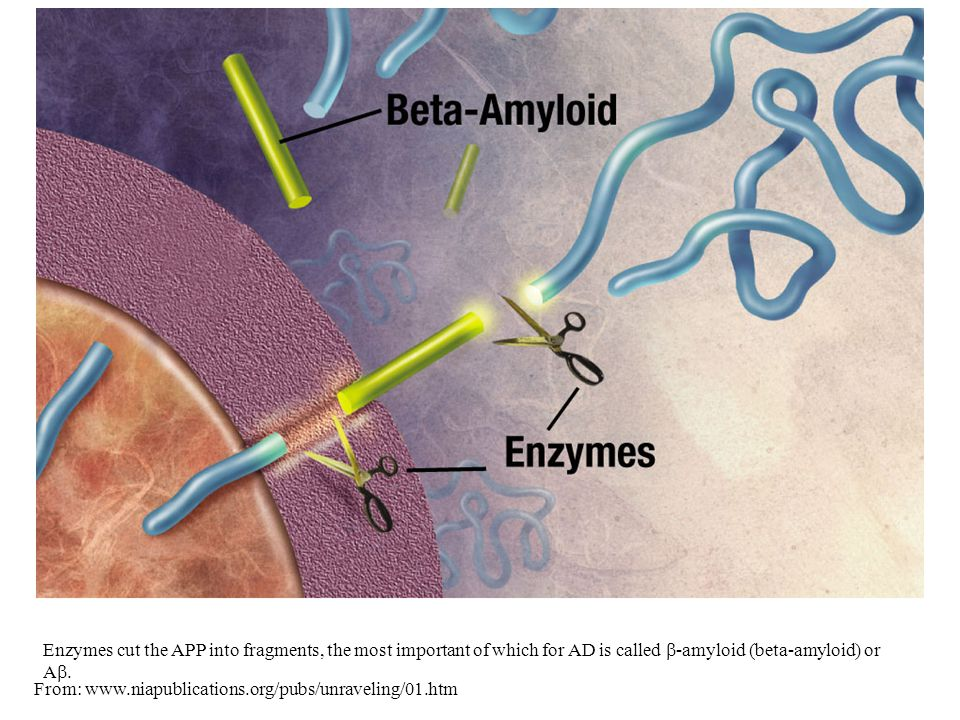 Enzymes cut the APP into fragments, the most important of which for AD is called  -amyloid (beta-amyloid) or A .