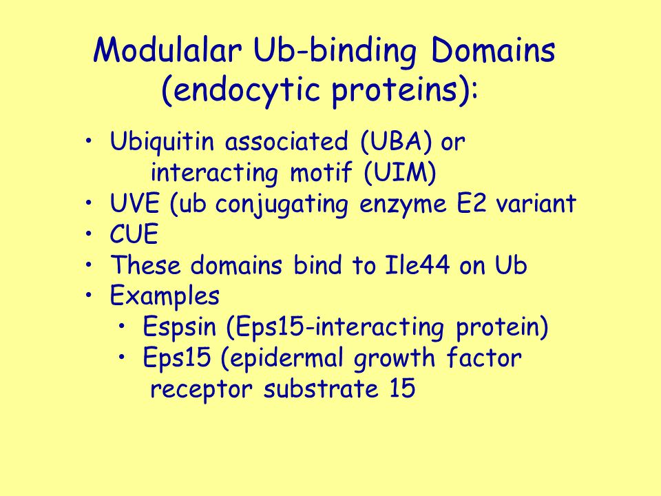 Modulalar Ub-binding Domains (endocytic proteins): Ubiquitin associated (UBA) or interacting motif (UIM) UVE (ub conjugating enzyme E2 variant CUE The