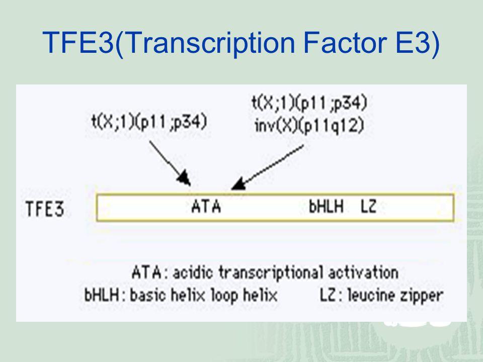 TFE3(Transcription Factor E3)