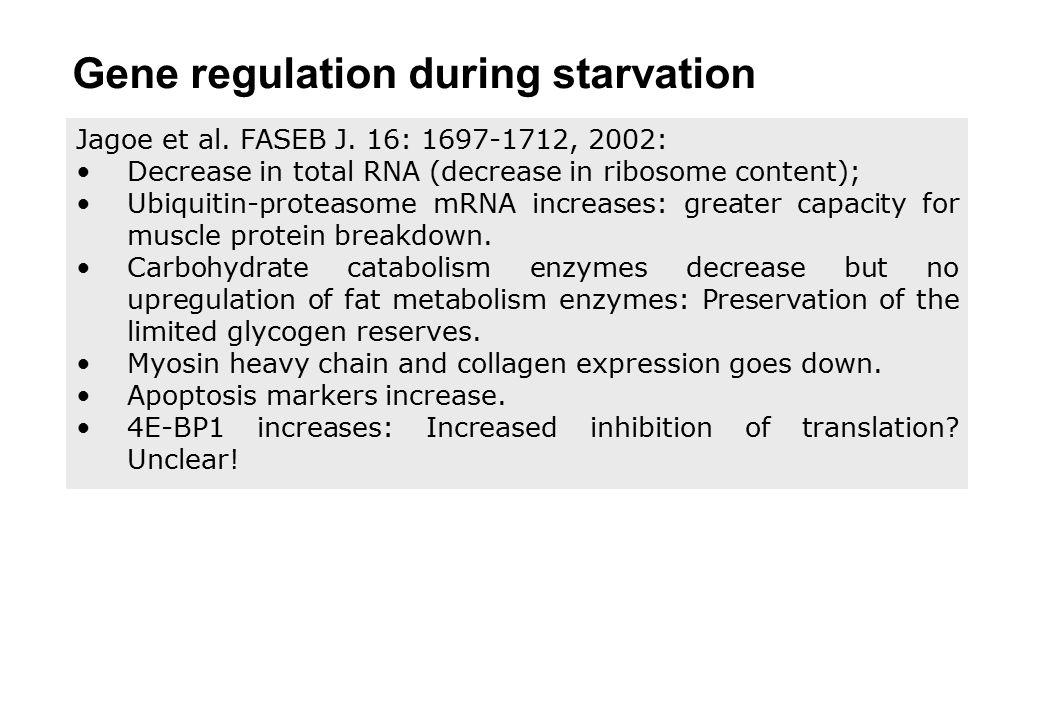 Jagoe et al. FASEB J. 16: 1697-1712, 2002: Decrease in total RNA (decrease in ribosome content); Ubiquitin-proteasome mRNA increases: greater capacity