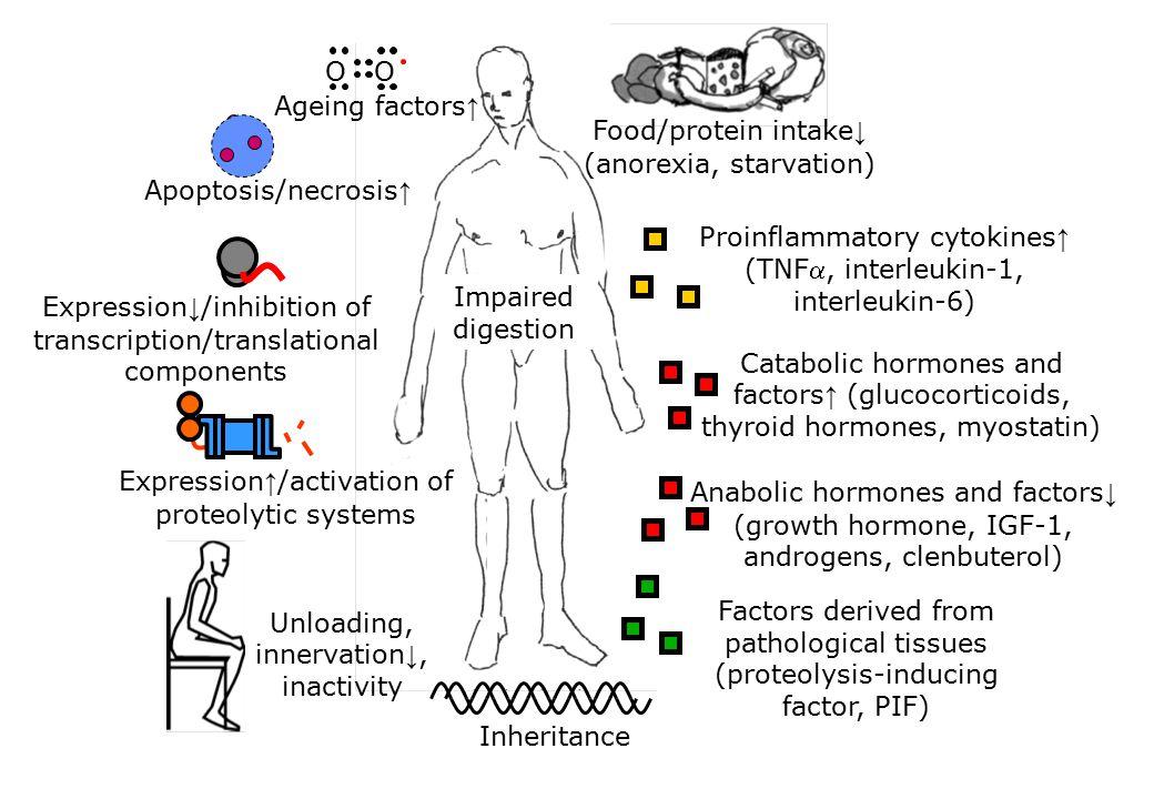 Proinflammatory cytokines ↑ (TNF, interleukin-1, interleukin-6) Anabolic hormones and factors ↓ (growth hormone, IGF-1, androgens, clenbuterol) Catab