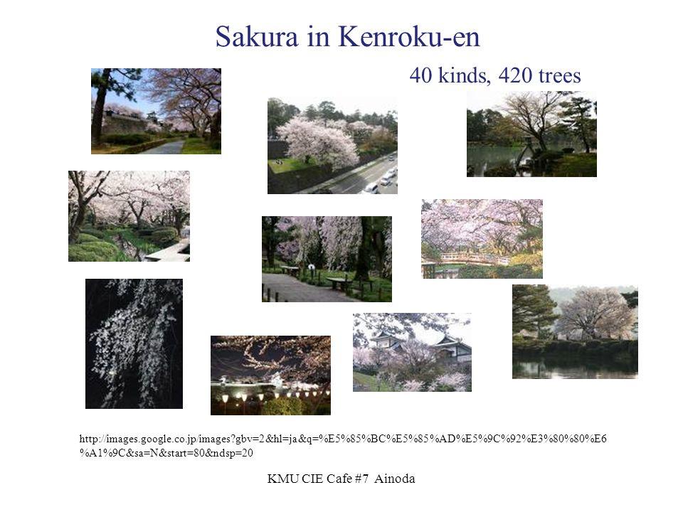 KMU CIE Cafe #7 Ainoda http://images.google.co.jp/images gbv=2&hl=ja&q=%E5%85%BC%E5%85%AD%E5%9C%92%E3%80%80%E6 %A1%9C&sa=N&start=80&ndsp=20 Sakura in Kenroku-en 40 kinds, 420 trees
