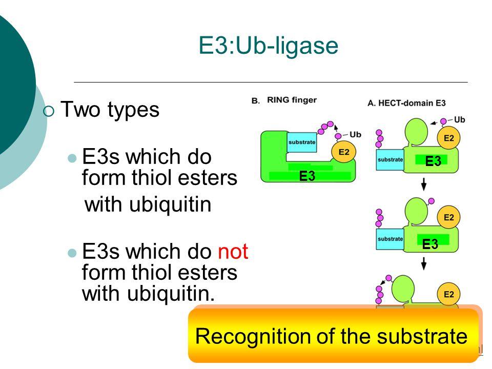 E3:Ub-ligase  Two types E3s which do form thiol esters with ubiquitin E3s which do not form thiol esters with ubiquitin.