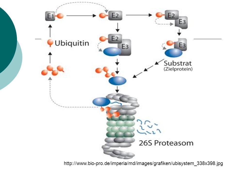 http://www.bio-pro.de/imperia/md/images/grafiken/ubisystem_338x398.jpg