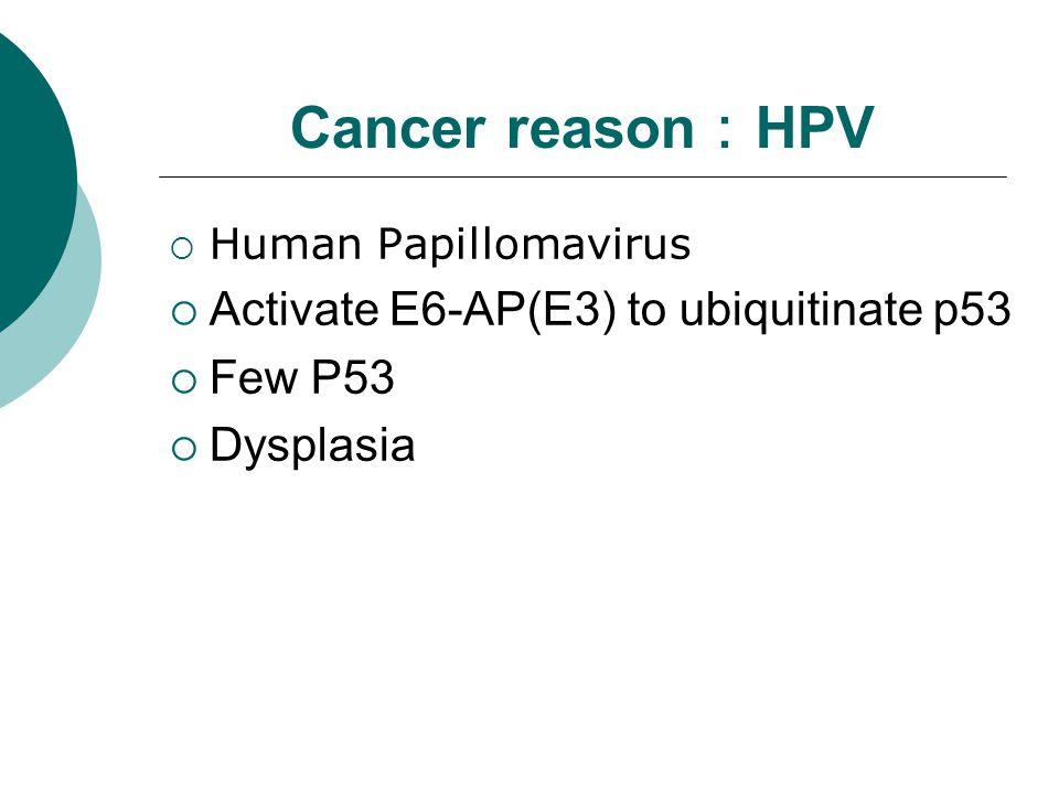 Cancer reason : HPV  Human Papillomavirus  Activate E6-AP(E3) to ubiquitinate p53  Few P53  Dysplasia