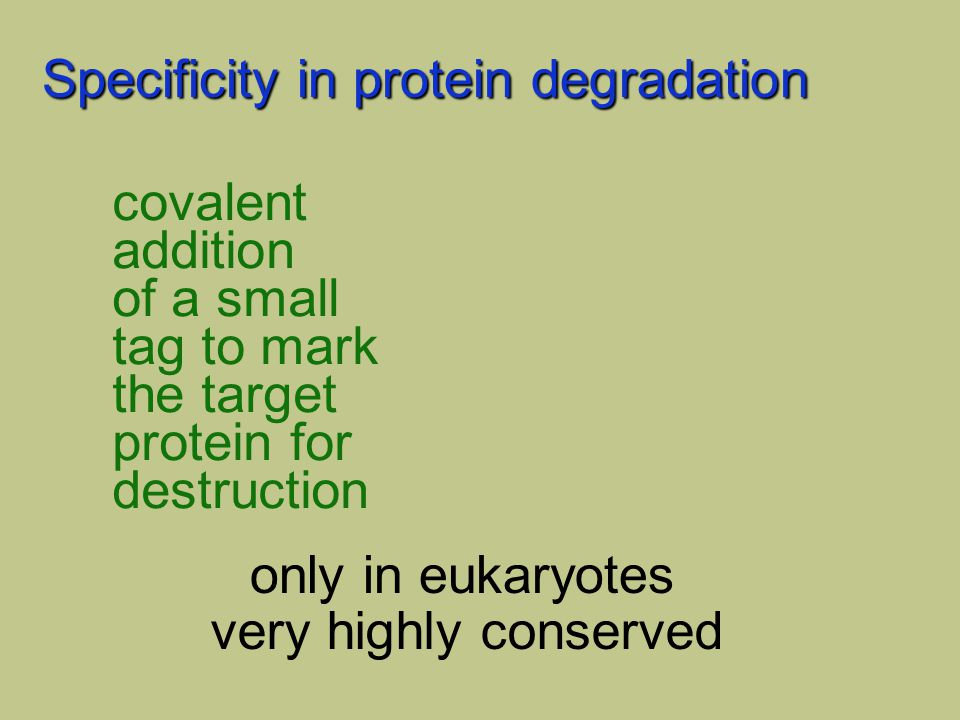 Specificity in protein degradation Ub ubiquitin 76 a.a. 8,000 mw covalent addition of a small tag to mark the target protein for destruction only in e
