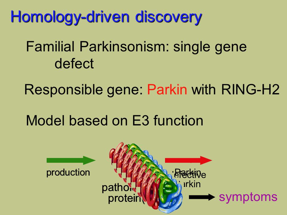 Homology-driven discovery Familial Parkinsonism: single gene defect Model based on E3 function Responsible gene: Parkin with RING-H2 pathological protein(s) productionParkinproduction pathological protein(s) defective Parkin symptoms