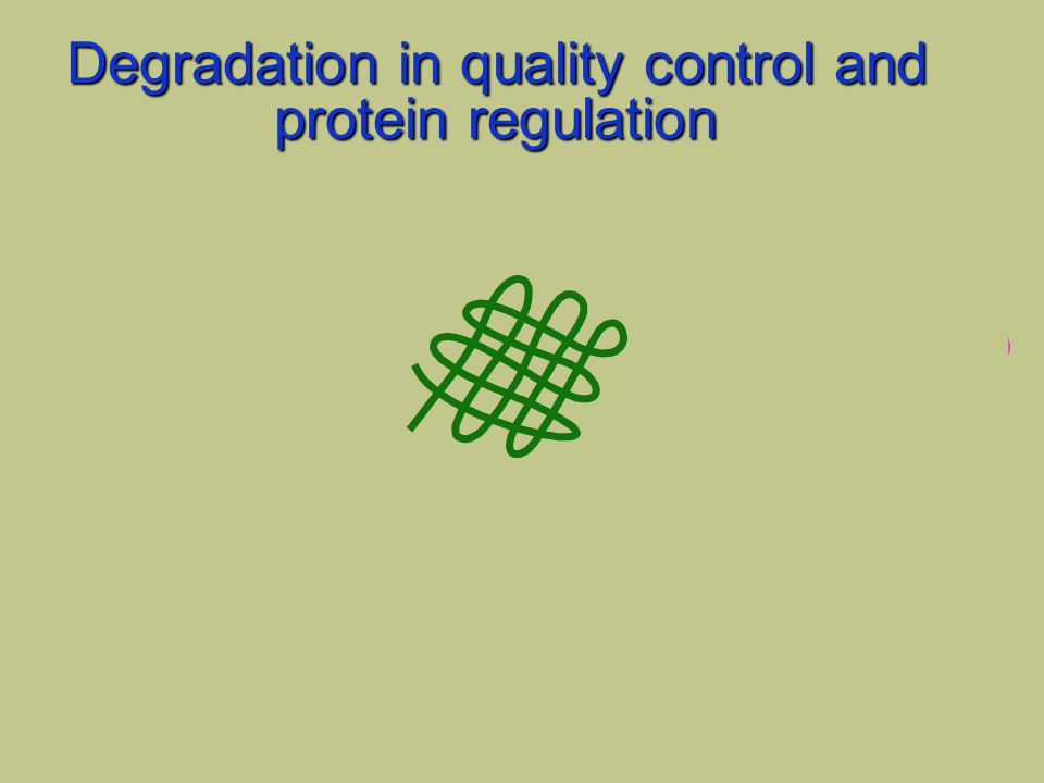 regulatory events altered structure Degradation in quality control and protein regulation