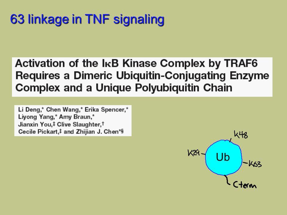 63 linkage in TNF signaling Ub
