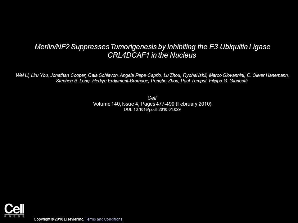 Merlin/NF2 Suppresses Tumorigenesis by Inhibiting the E3 Ubiquitin Ligase CRL4DCAF1 in the Nucleus Wei Li, Liru You, Jonathan Cooper, Gaia Schiavon, Angela Pepe-Caprio, Lu Zhou, Ryohei Ishii, Marco Giovannini, C.