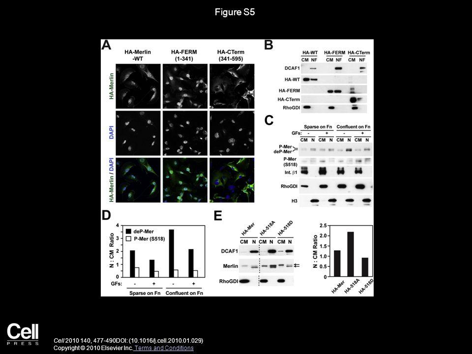 Figure S5 Cell 2010 140, 477-490DOI: (10.1016/j.cell.2010.01.029) Copyright © 2010 Elsevier Inc.