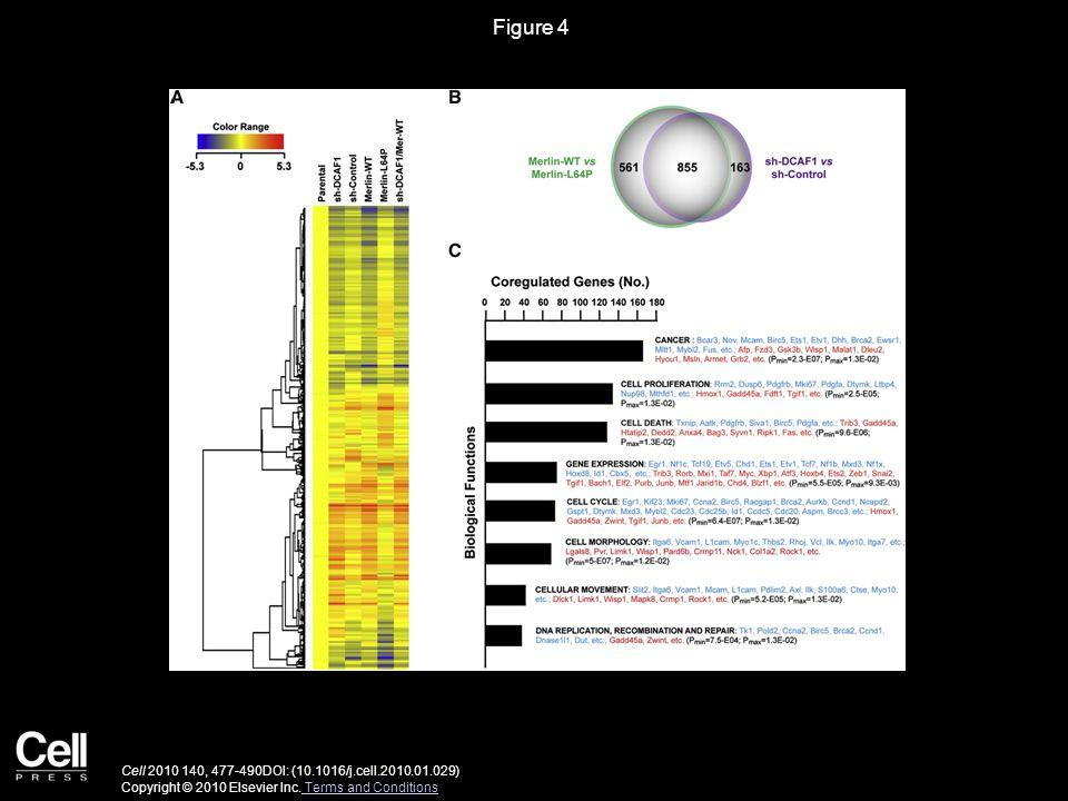 Figure 4 Cell 2010 140, 477-490DOI: (10.1016/j.cell.2010.01.029) Copyright © 2010 Elsevier Inc.