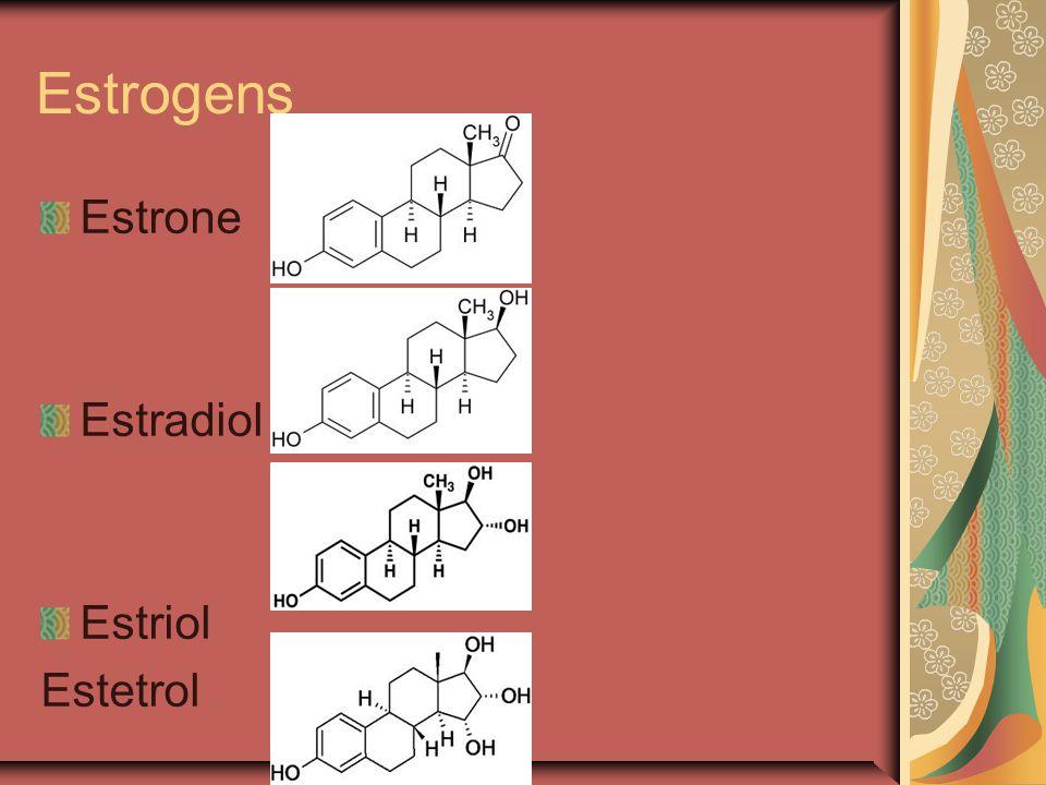 Estrogens Estrone Estradiol Estriol Estetrol