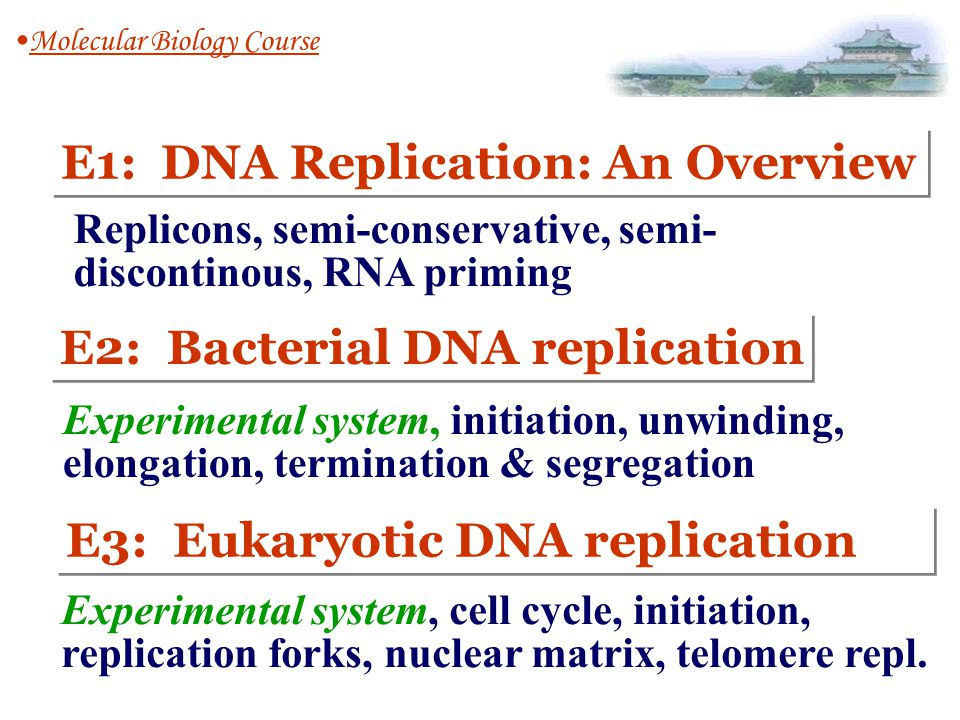 E3-1: In vitro experimental systems 1.Purified DNA : 2.All the proteins and other factors for its complete replications DNA replication