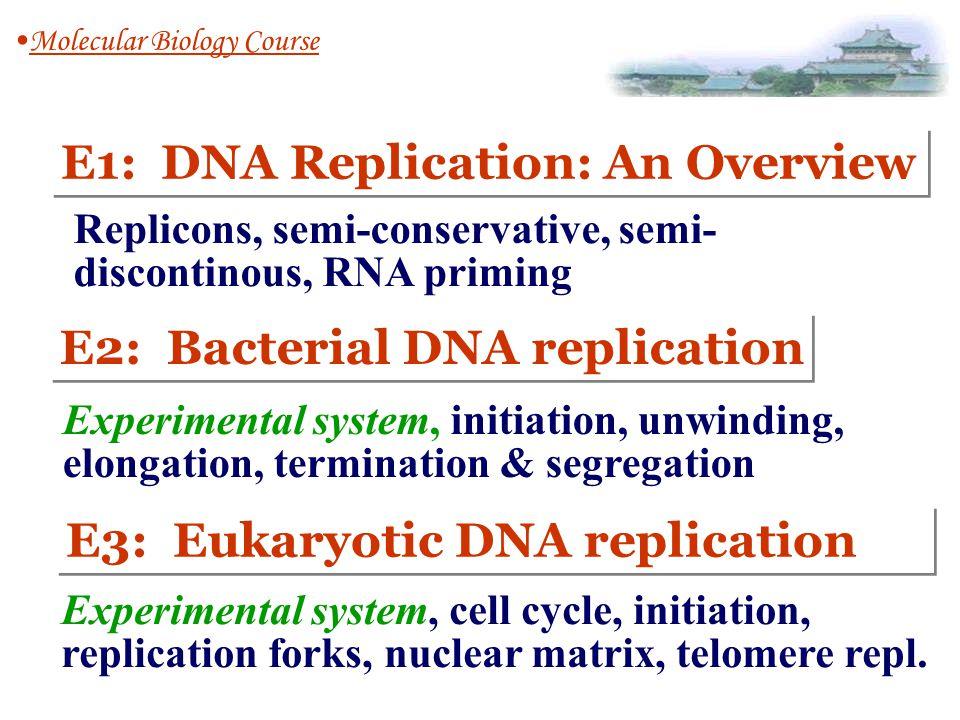 DNA replication E1: DNA Replication: An Overview 1.Replicons 2.semi-conservative mechanism 3.semi-discontinous replication 4.RNA priming