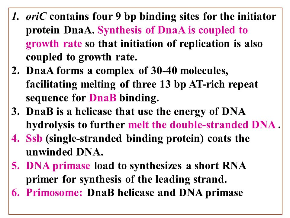 1.oriC contains four 9 bp binding sites for the initiator protein DnaA. Synthesis of DnaA is coupled to growth rate so that initiation of replication