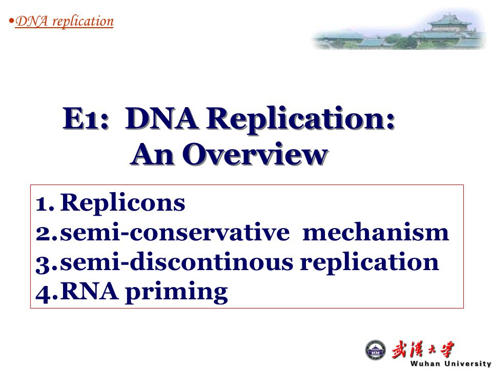 DNA replication E1: DNA Replication: An Overview 1.Replicons 2.semi-conservative mechanism 3.semi-discontinous replication 4.RNA priming