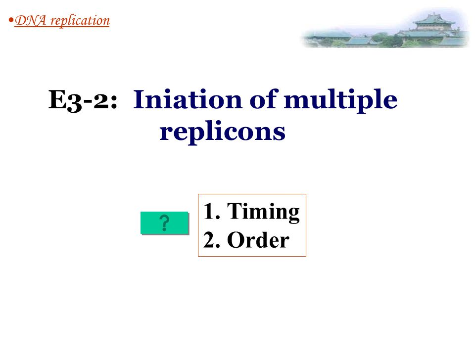 E3-2: Iniation of multiple replicons DNA replication 1.Timing 2.Order