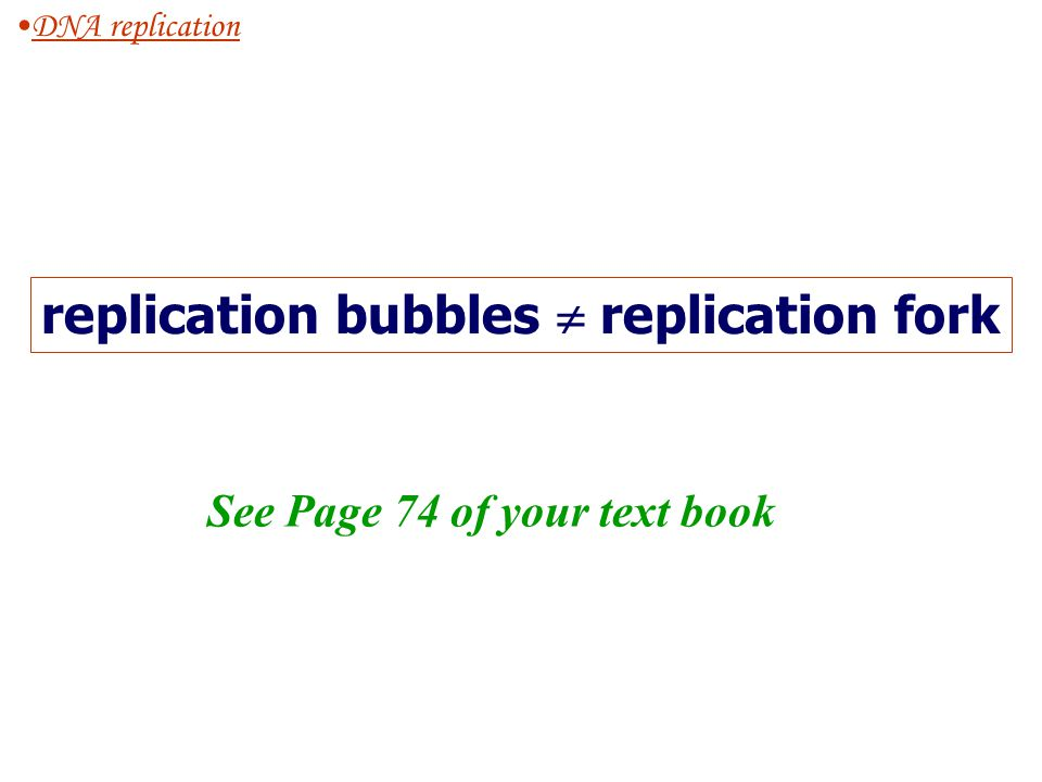replication bubbles  replication fork See Page 74 of your text book
