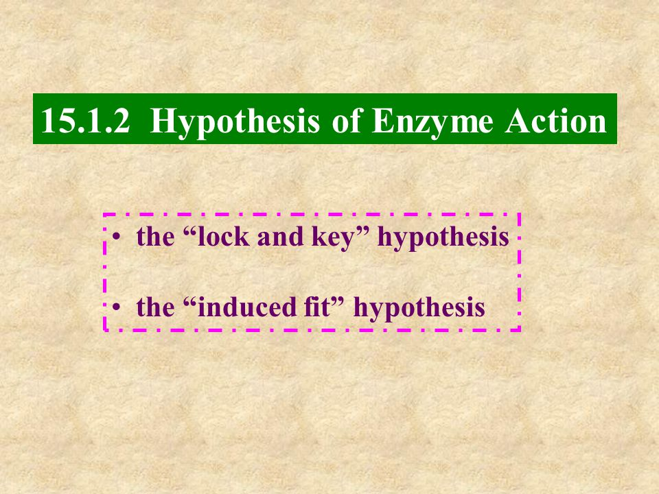 15.1.2 Hypothesis of Enzyme Action the lock and key hypothesis the induced fit hypothesis