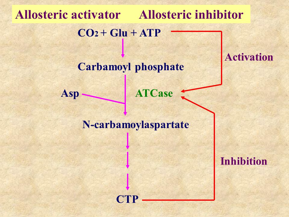 Allosteric activator Allosteric inhibitor CO 2 + Glu + ATP CTP N-carbamoylaspartate Asp ATCase Carbamoyl phosphate Activation Inhibition