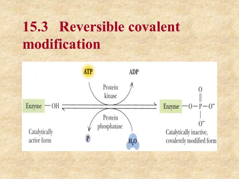 15.4 Proteolytic Activation