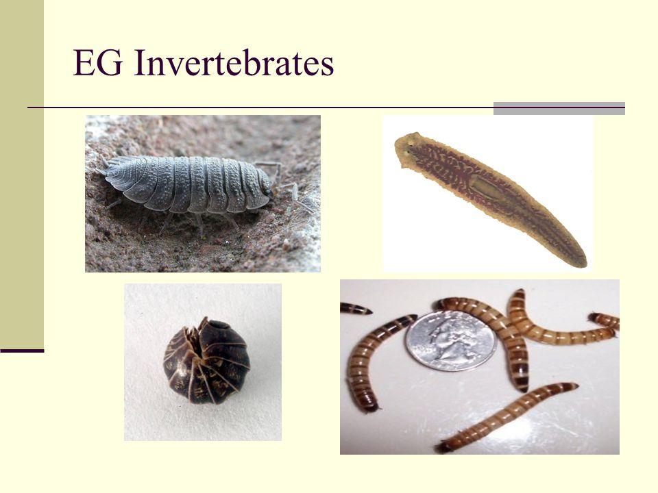 EG Invertebrates