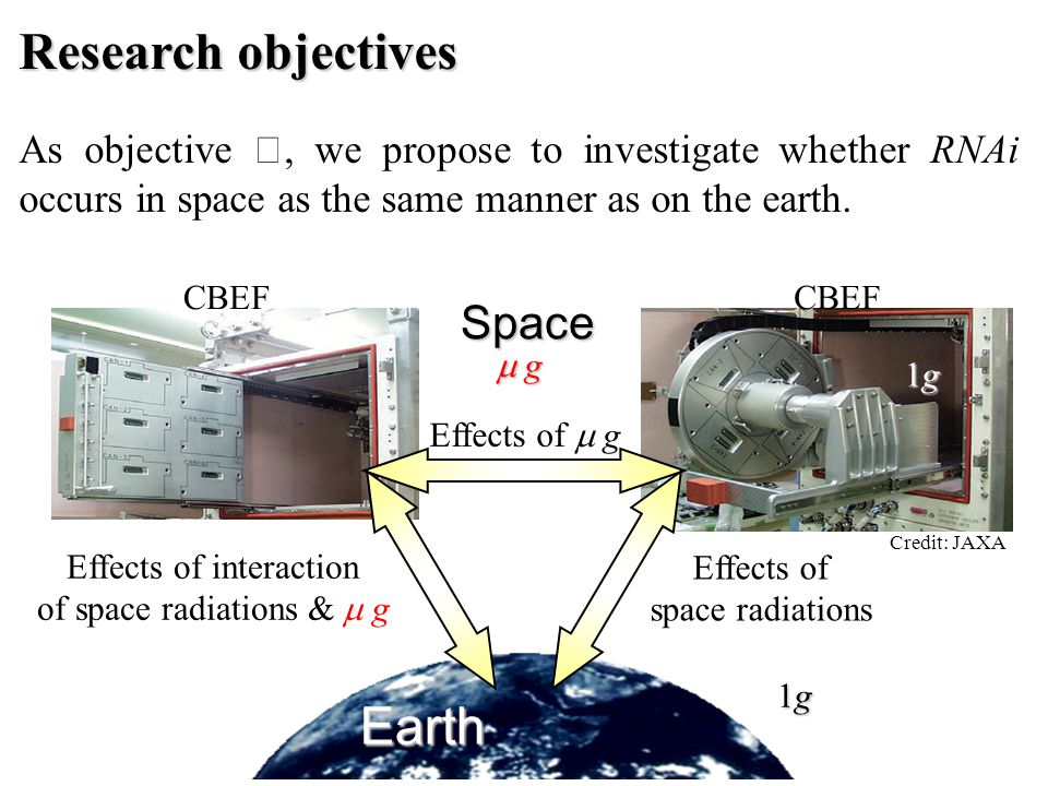 Research objectives As objective Ⅰ, we propose to investigate whether RNAi occurs in space as the same manner as on the earth. Earth Effects of space