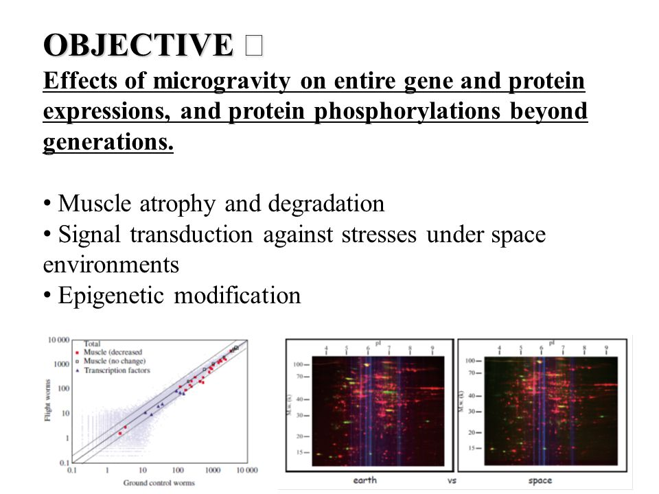 OBJECTIVE Ⅱ Effects of microgravity on entire gene and protein expressions, and protein phosphorylations beyond generations. Muscle atrophy and degrad