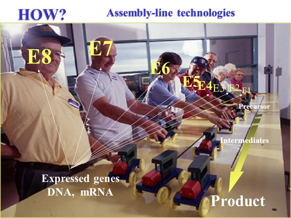 Assembly-line technologies E2 E1 E3 E4 E5 E6 E7 Precursor Product Intermediates HOW.