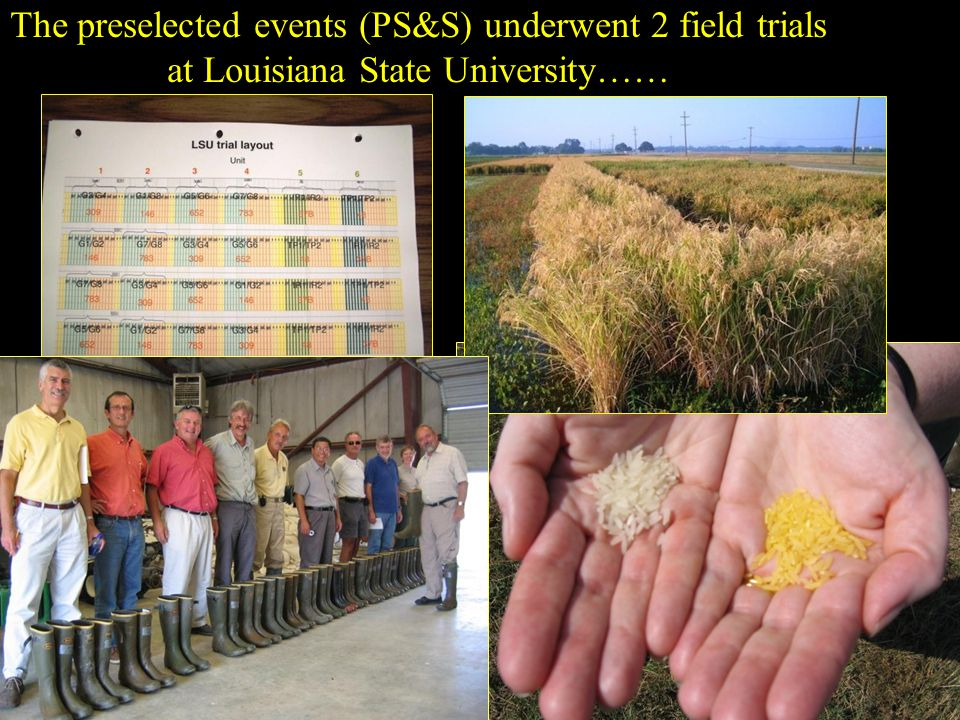 The preselected events (PS&S) underwent 2 field trials at Louisiana State University……