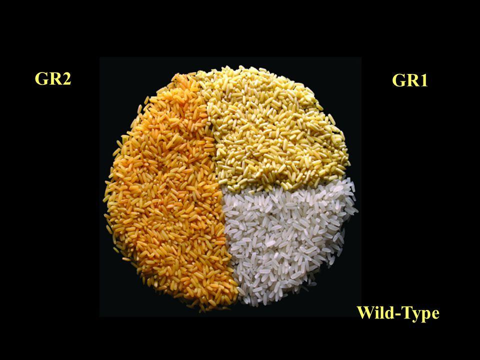 GR2 GR1 Wild-Type